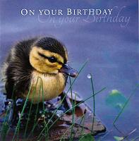 Birthday Card TE4118XA