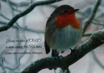 Christmas Card, Robin on a Snowy Branch, GMC083
