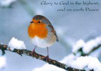 Christmas Cards, Robin on Snowy Branch, GMC018