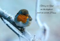 Christmas Card, Robin on a Frosty Branch, GMC083