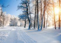Christmas Cards, Wintery Sun, D1802